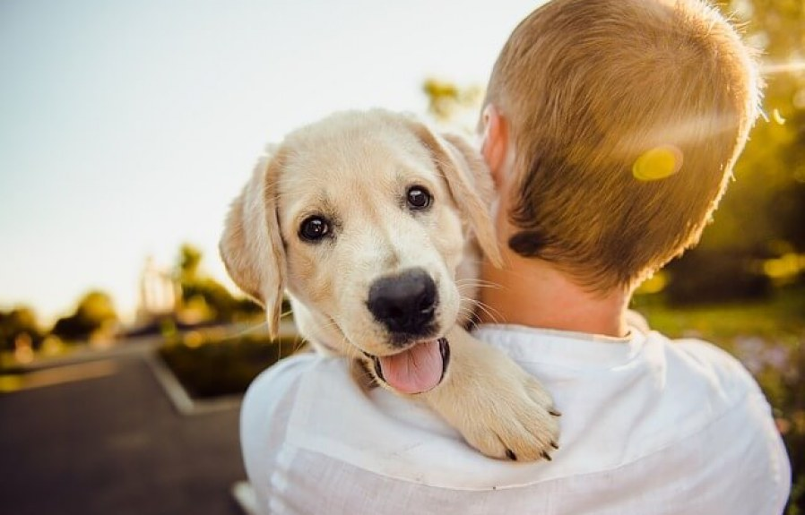 How to choose the Best Food for your dog?