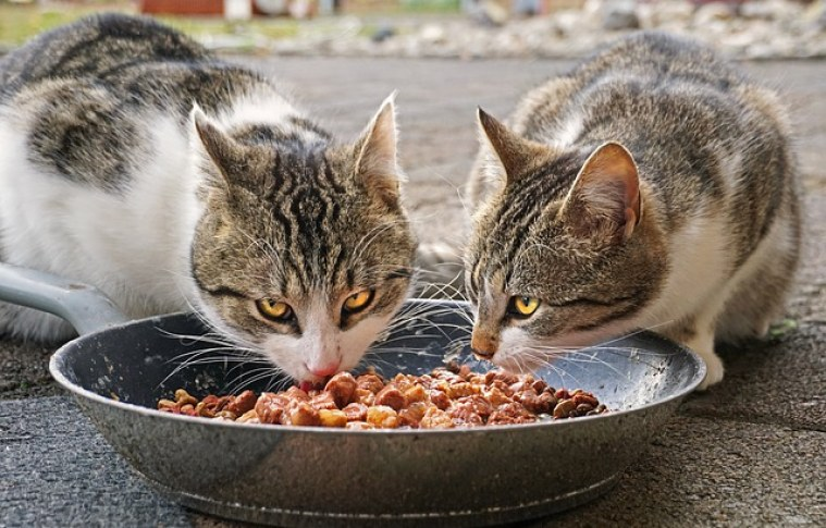 How to choose the Best Food for your cat?