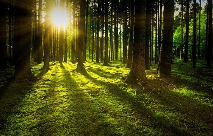 How to plant trees surfing the internet?